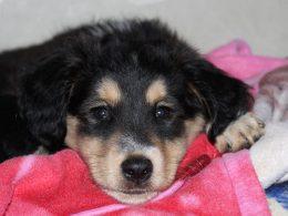Photo of sad puppy