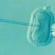 IVF in lab