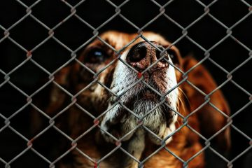 A sad dog looking up through the cold metal bars of its cage