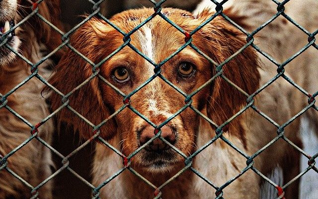A dog behind a cage wire door at a shelter.